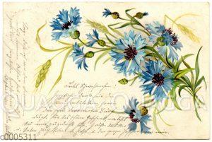 Postkarte mit Kornblumen-Motiv