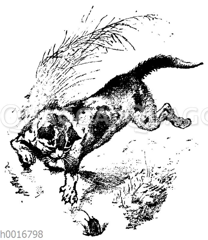 Der arme Müllersbursch und das Kätzchen