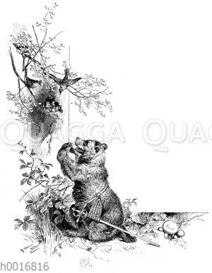 Der Zaunkönig und der Bär