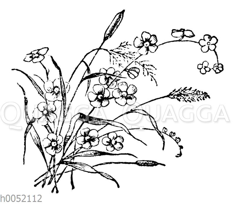 Blumenstrauß: Feldblumen