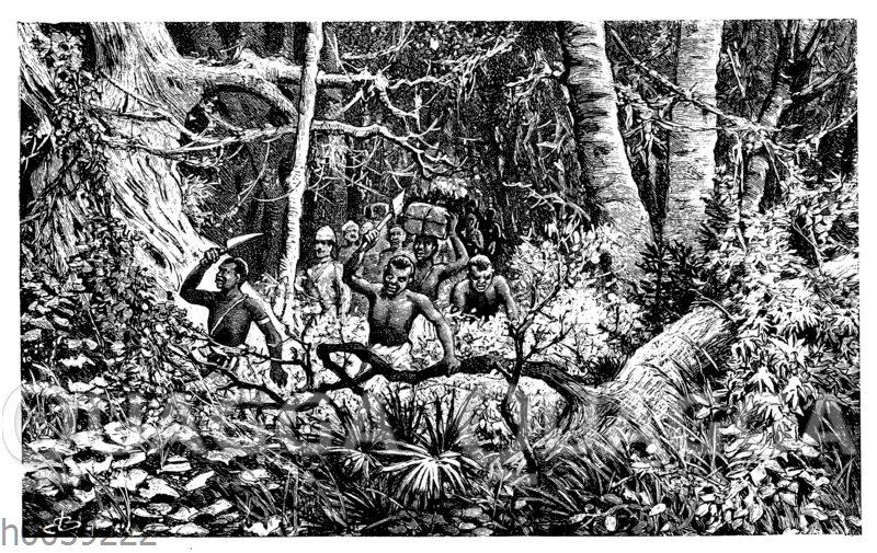 Marsch durch den Urwald