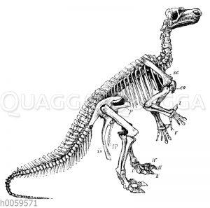 Iguanodon Mantelli