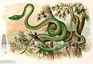 Blinkende Baumschlange