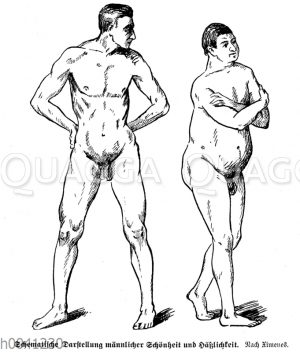 Schematische Darstellung männlicher Schönheit und Hässlichkeit