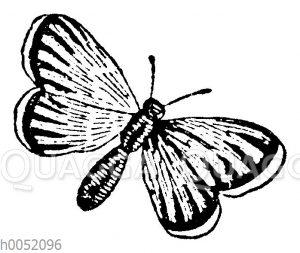 Vignette: Fliegender Schmetterling
