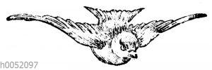 Vignette: Schwalbe im Flug