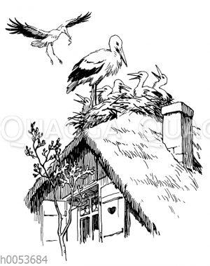 Storchennest auf einem Dach mit Storch im Anflug