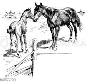 Stute und Fohlen