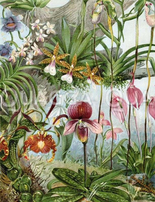 Orchideen-Arten