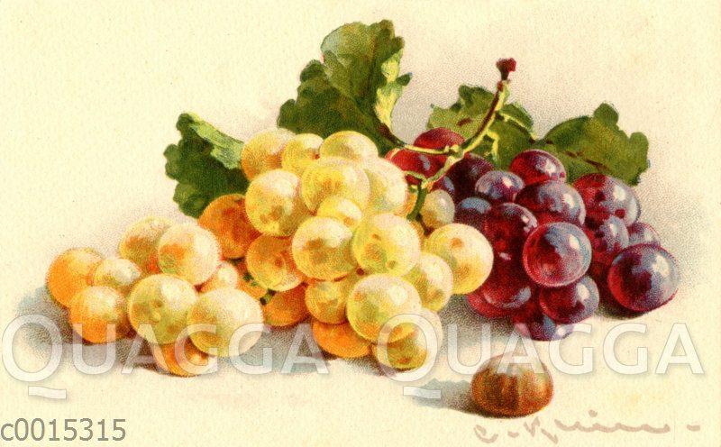Weiße und blaue Weintrauben