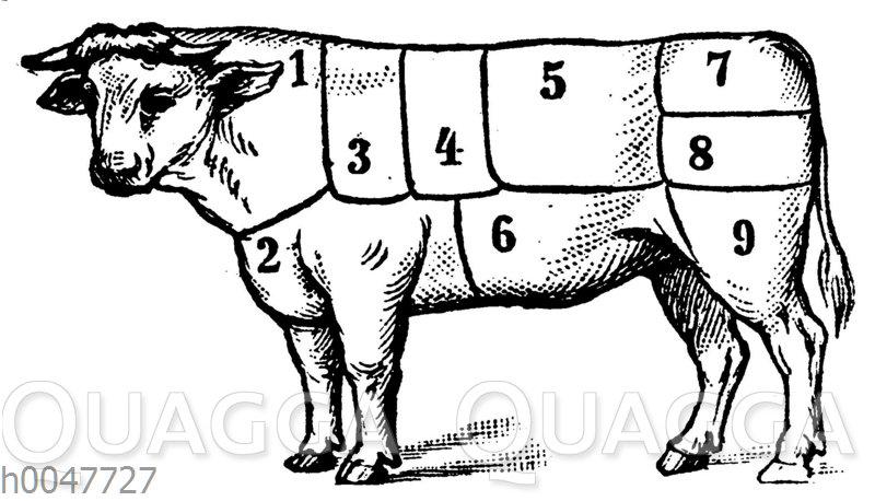 Rind: Fleischeinteilung