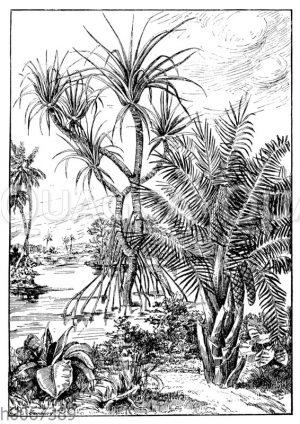 Strandlandschaft in Kamerun.