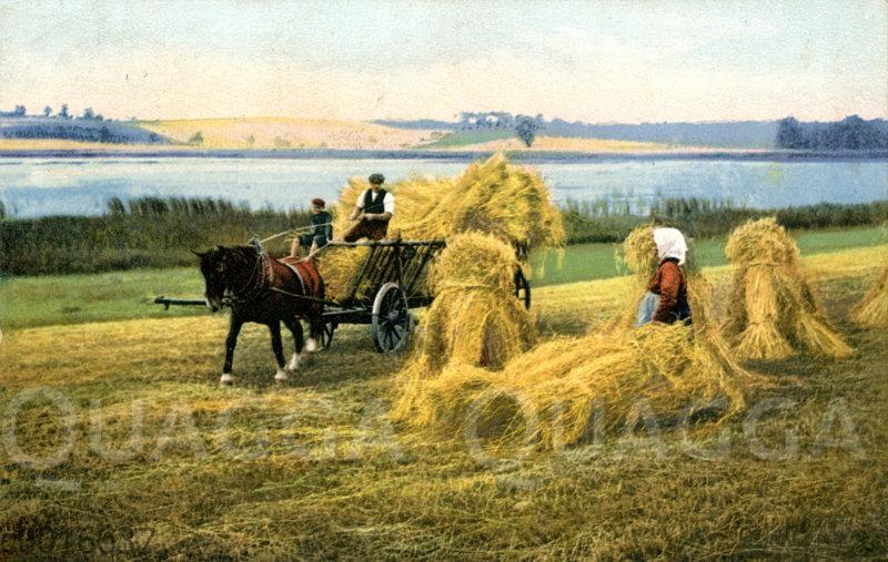 Getreideernte: Aufladen der Garben