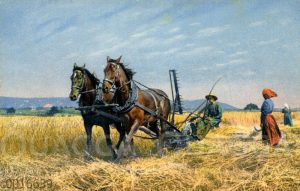 Getreideernte mit einer von zwei Pferden gezogenen Mähmaschine