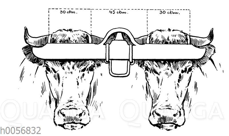 Stirndoppeljoch zum Anspannen von Rindern