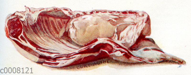 Fleisch: Halber Hammelrücken mit Niere und Bauchlappen
