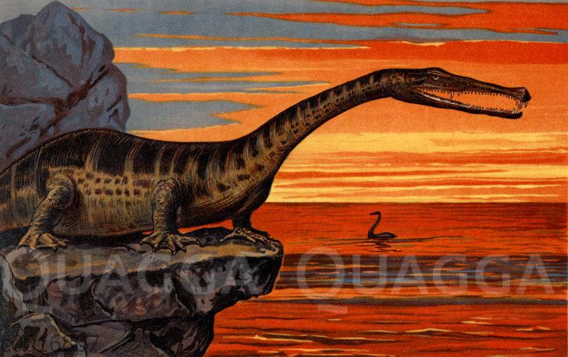 Bastardechse (Nothosaurus mirabilis)