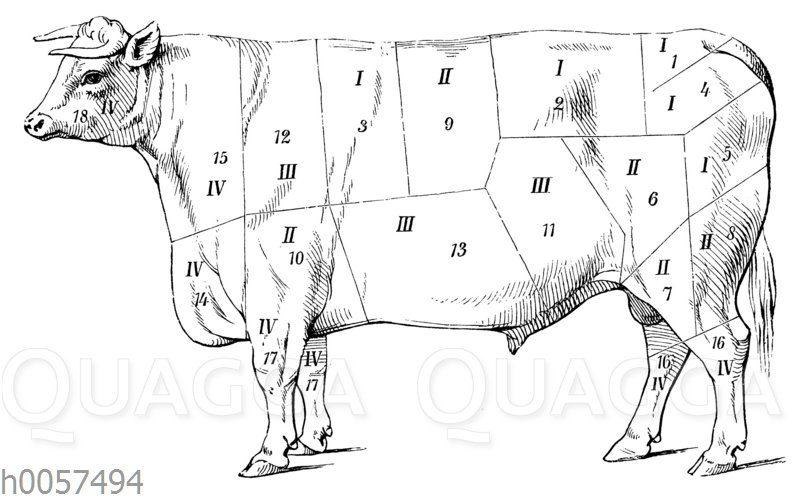 Einteilung des Ochsen auf dem Londoner Fleischmarkt