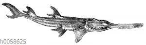 Sagefisch