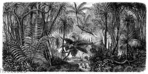 Gebirgswald auf der Insel Bonia-Sima