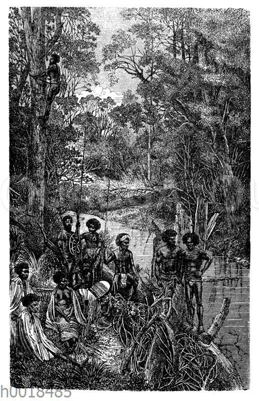 Australische Ureinwohner erklettern einen Eukalyptus-Baum