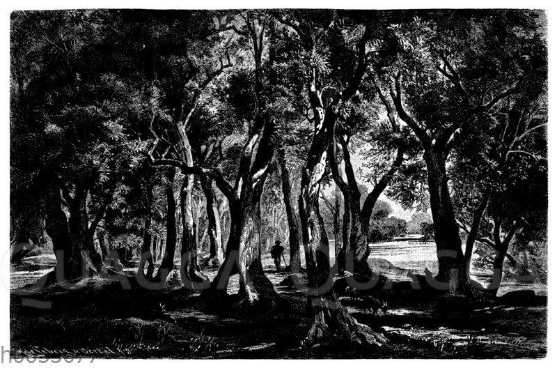 Olivenhain am Ufer des Gardasees