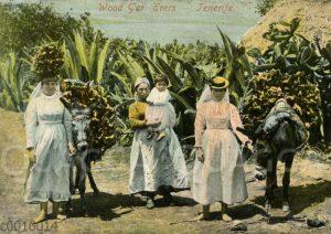 Holzsammlerinnen auf Tenriffa