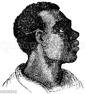 Mensch: Afrikaner: Schwarzer