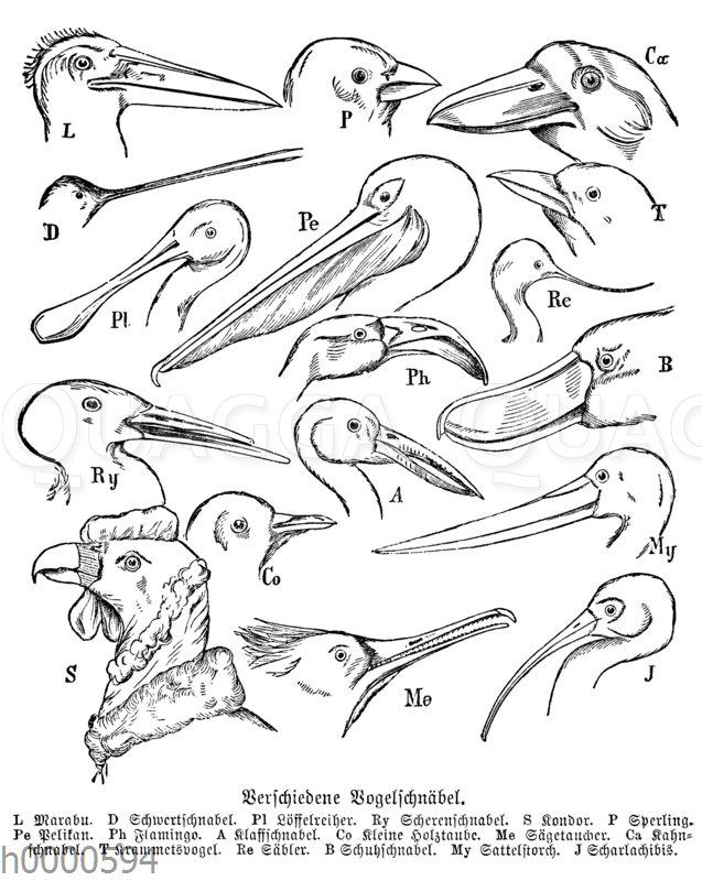 Vogelschnabelformen