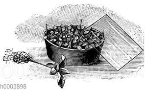 Auflegen einer Glastafel auf ein Gefäß mit vorgeschnittenen Sämlingen