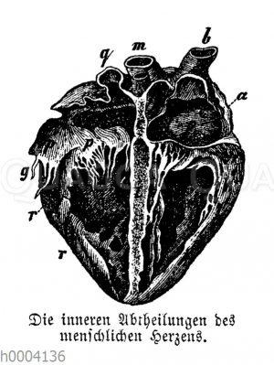 Mensch: Herz