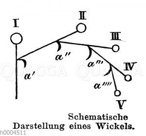 Wickel: Schematische Darstellung