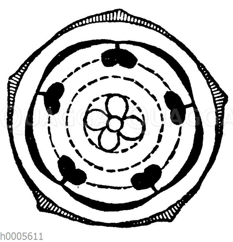 Blütendiagramm: Rauhblättrige Gewächse