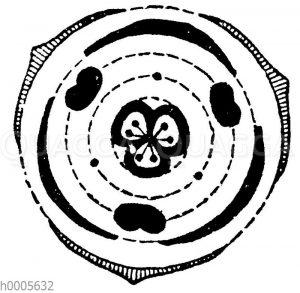 Blütendiagramm: Schwertliliengewächse