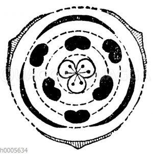 Blütendiagramm: Liliengewächse