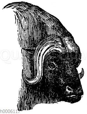 Bisamochse