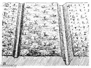 Trockenlegung des Landes durch Kopfdrains und vertiefte Furchen