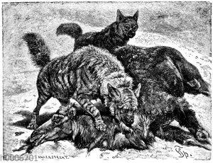 Gestreifte Hyäne