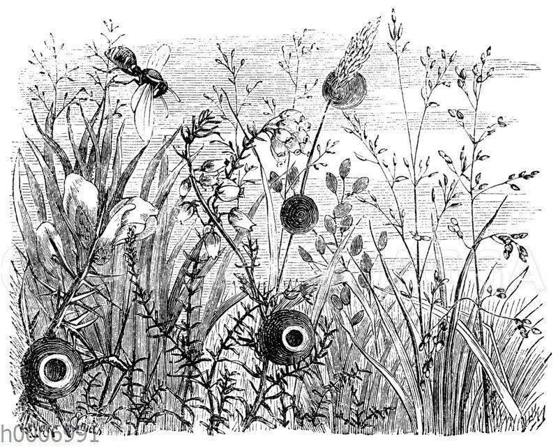 Pillenwespe: Nester