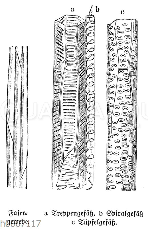 Fasergewebe