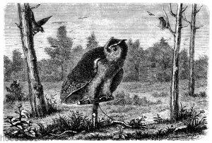 Krähenhütte mit einem Uhu als Reizvogel