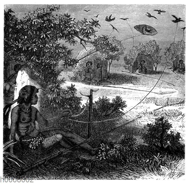 Taubenfang auf den Samoa-Inseln