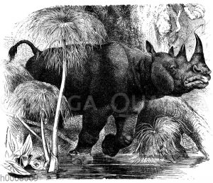 Zweihörniges Rhinozeros
