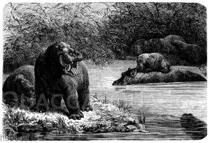 Nilpferde am Wasser