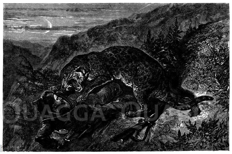 Leopard greift Jäger an