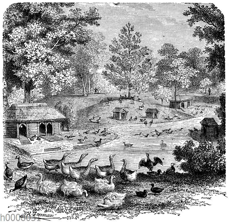 Federviehställe im Akklimatisationsgarten zu Paris