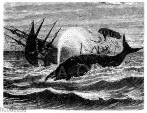 Missglückter Angriff auf ein Walfisch