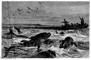 Delfine auf der Fährte eines Schiffes