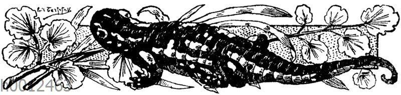 Ornament: Salamander