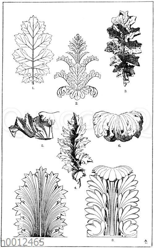 Akanthusblatt: 1. Blatt von Acanthus mollis. (Jacobsthal). 2. Akanthuskelch mit Blatt- und Blütenstand von Acanthus mollis. (Jacobsthal). 3. Blatt von Acanthus mollis. (Raguenet). 4. Blatt von Acanthus spinosus. (Gewerbehalle). 5. Akanthuskelchpartie